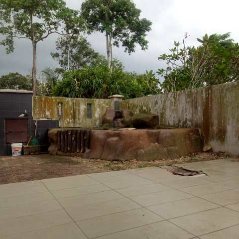 The area of the pond after the removal of the big mango tree
